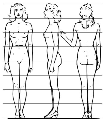 proportions of the female body