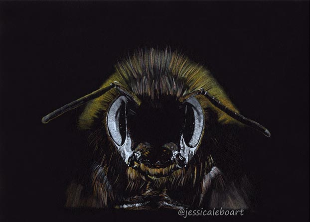 bee drawing on black paper by Jessica Lebo