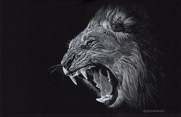 lion drawing on black paper by Jessica Lebo