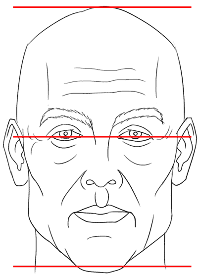 proportions of the face, eyes in center of head