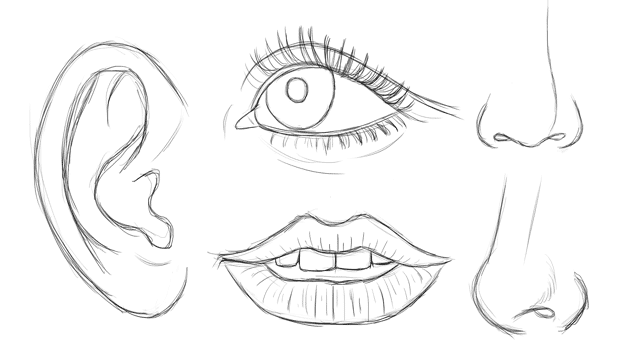 drawing studies of the facial features