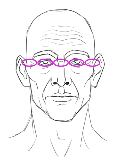 proportions + width of the face
